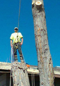 tree-pruning-and-tree-removal-services-montrose-telluride
